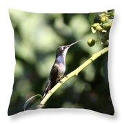 Bird - Hummingbird - The Observer Throw Pillow