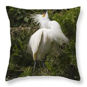 Bird Mating Display - Snowy Egret  Throw Pillow