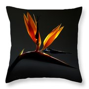 Bird Of Paradise 3 Throw Pillow