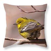 Bird - Pine Warbler - Detail Throw Pillow