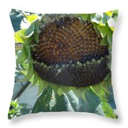 Bird Seed Throw Pillow