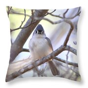 Bird - Tufted Titmouse - Busted Throw Pillow