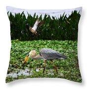 Birding Action At Circle B Bar Reserve Throw Pillow