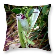 Birds And Bees And Luna Moths Throw Pillow