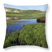 Bison At Edge Of Pool, Hayden Valley Throw Pillow