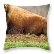 Bison At Rest Throw Pillow