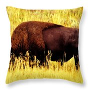 Bison In Field Throw Pillow