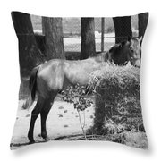 Black And White Hay Horse Throw Pillow