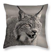 Black And White Lynx Throw Pillow