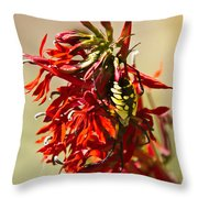Black And Yellow Garden Spider 1 Throw Pillow