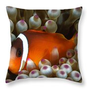 Black Anemonefish, Fiji Throw Pillow