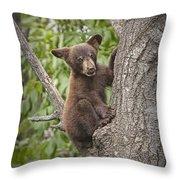 Black Bear Cub Hanging On Throw Pillow