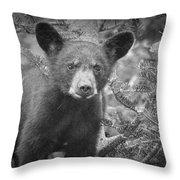 Black Bear Cub In A Pine Tree Throw Pillow
