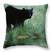 Black Bear Ursus Americanus Throw Pillow