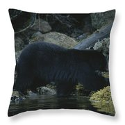 Black Bear With Her Young Cub Tagging Throw Pillow