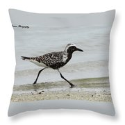 Black Bellied Plover Throw Pillow