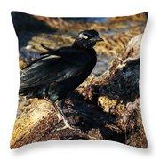 Black Bird With Yellow Eyes Throw Pillow