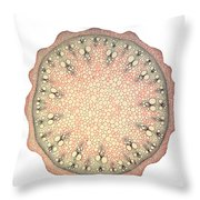 Black Bryony Stem Throw Pillow