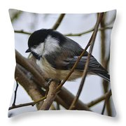 Black Capped Chick Throw Pillow