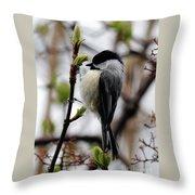 Black-capped Chickadee On Staff Throw Pillow