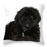 Black Cockerpoo Puppy Throw Pillow