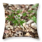 Black Cohosh Throw Pillow