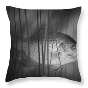 Black Crappie Or Speckled Bass Among The Reeds Throw Pillow