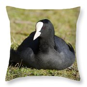 Black Duck Throw Pillow