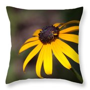 Black Eyed Susan With Young Bee Throw Pillow