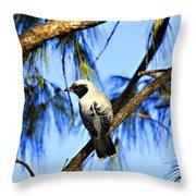 Black Faced Cuckoo Shrike V3 Throw Pillow