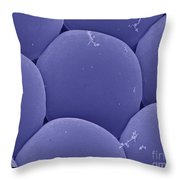 Black Fly Eye, Sem Throw Pillow by Ted Kinsman