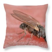 Black Fly Throw Pillow