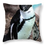 Black-footed Penguin Throw Pillow