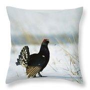 Black Grouse Tetrao Tetrix Throw Pillow by Konrad Wothe
