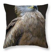 Black Kite 4 Throw Pillow