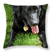 Black Lab Dog With A Ball Throw Pillow by Elena Elisseeva