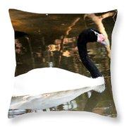 Black Neck Swan Throw Pillow