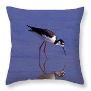 Black-necked Stilt Bird Foraging In Throw Pillow