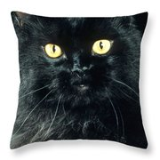 Black Persian Cat Throw Pillow