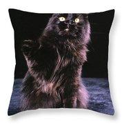 Black Persian Cat Reaches Throw Pillow
