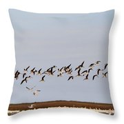 Black Skimmers In Flight Throw Pillow
