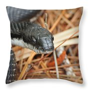 Black Snake Throw Pillow