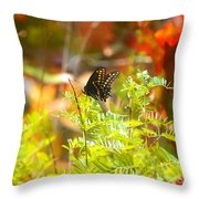 Black Swallow Tail Butterfly In Autumn Colors Throw Pillow