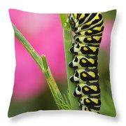 Black Swallowtail Caterpillar On Garden Throw Pillow