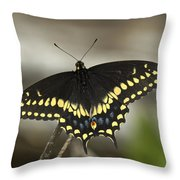Black Swallowtail Din103 Throw Pillow