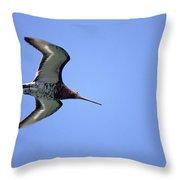 Black-tailed Godwit Limosa Limosa Throw Pillow