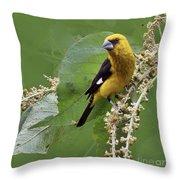 Black-thighed Grosbeak 2 - Dp Throw Pillow