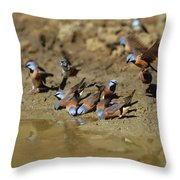 Black-throated Finches At Waterhole Throw Pillow