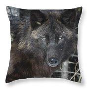 Black Timber Wolf Throw Pillow