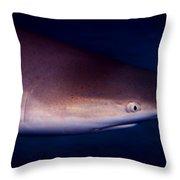 Black Tip Reef Shark Throw Pillow
